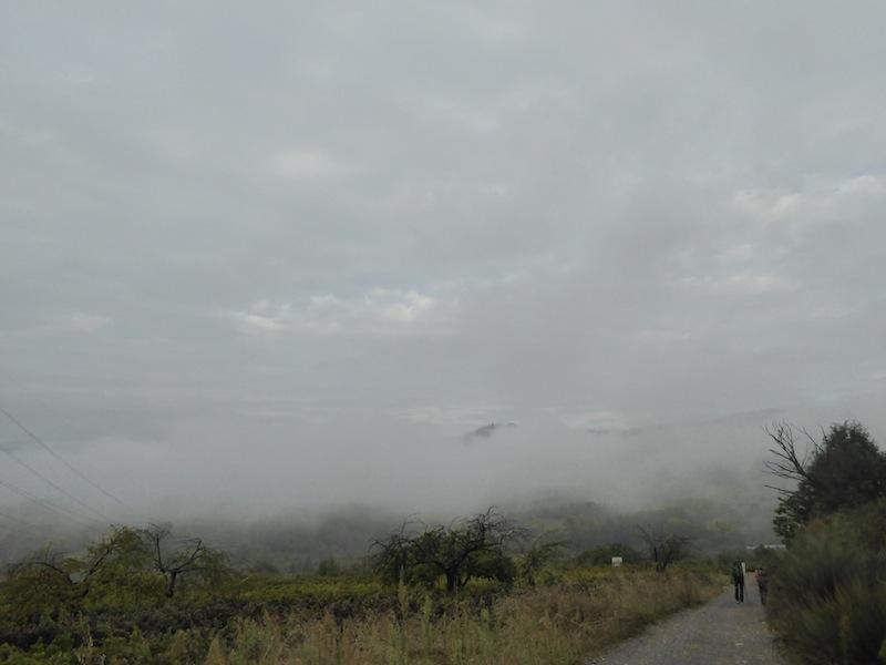 I love the fog.