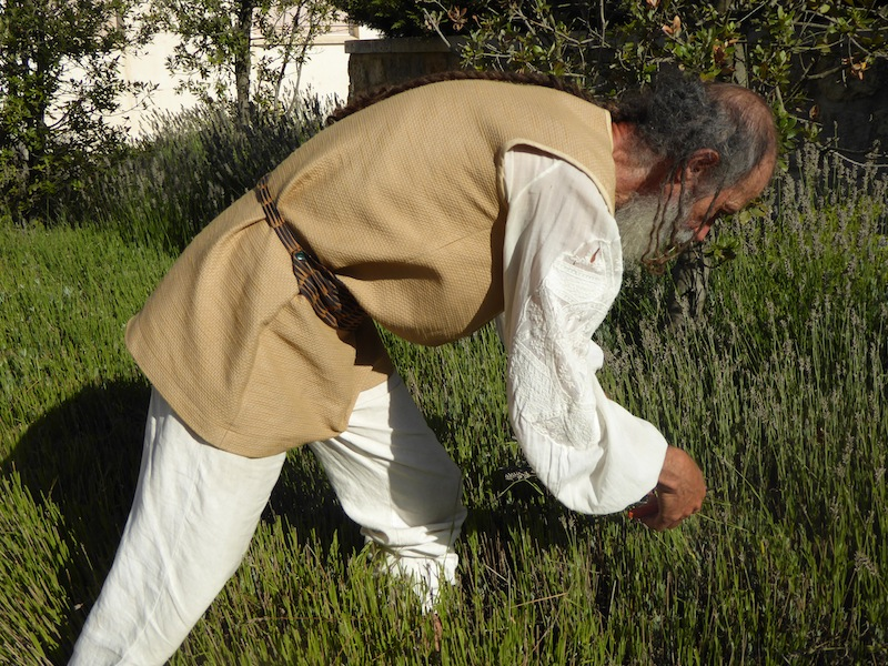 This man was picking lavendar for his albergue.