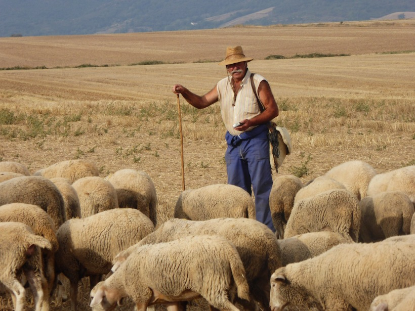 Here is the sheep herder with his sheep.