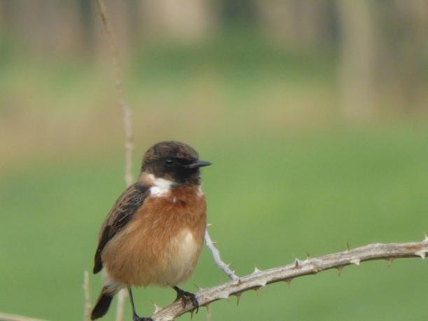 A bird singing on the Camino.