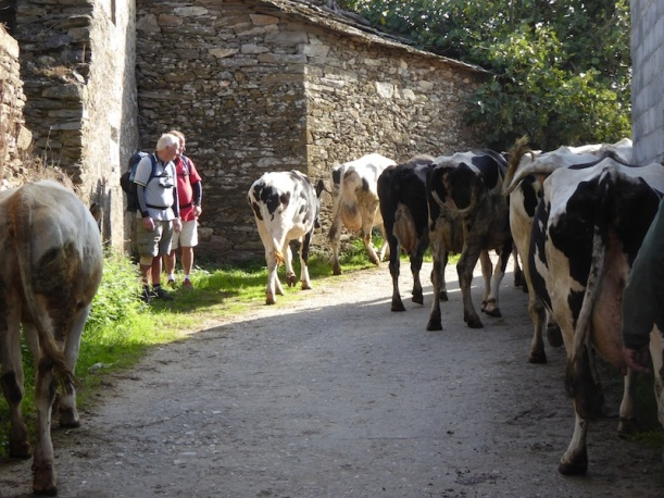 Watching the cows in Vilcha