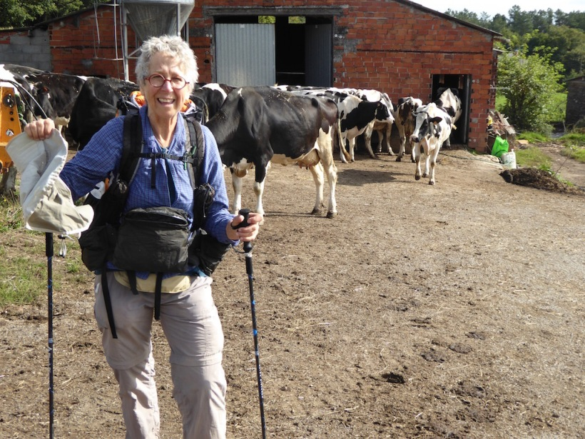 Nancy and Cows