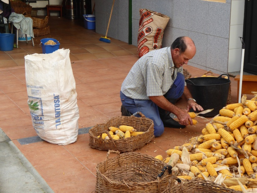 Preparing corn for Horreo