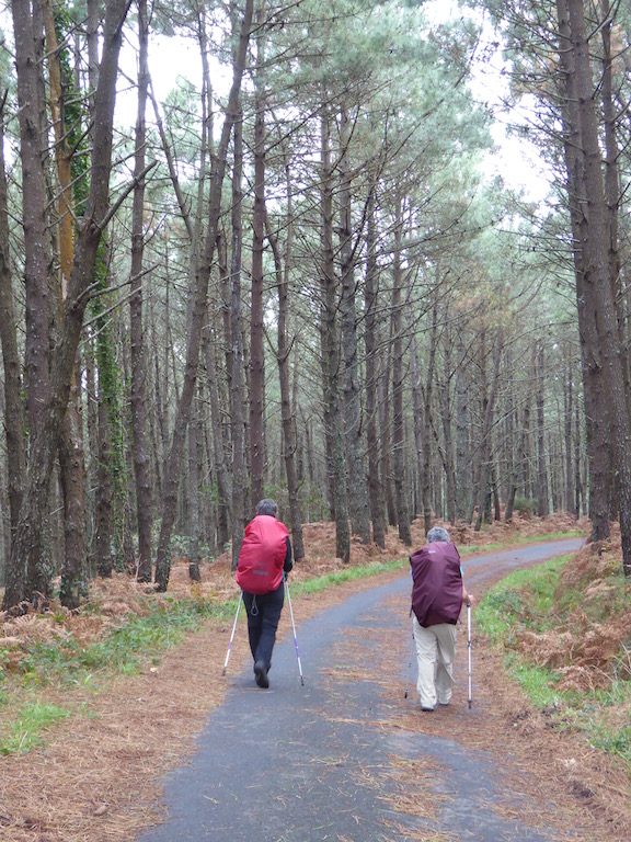 Waling through forest - to Lires