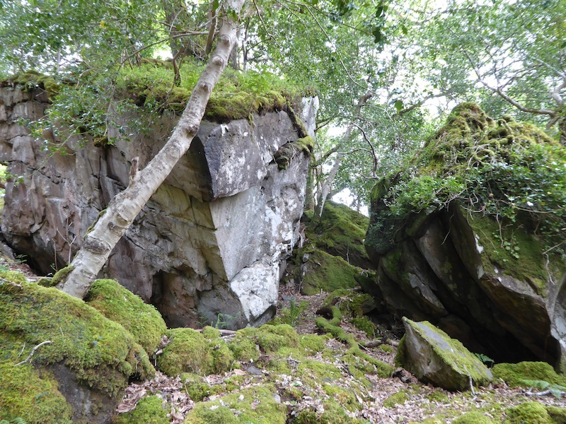 These large moss covered rocks were amazing.