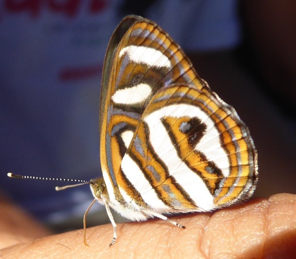 This is a beautiful butterfly.