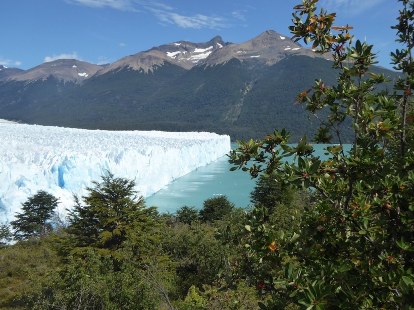 This is the north end of Perito Moreno with plants in the front.
