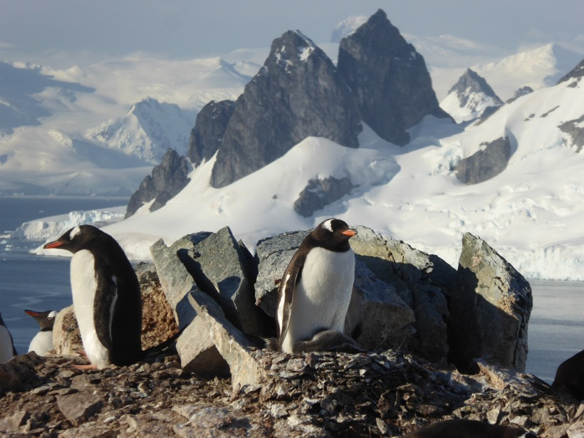 Adorable penguins especially with the peaks in the background.