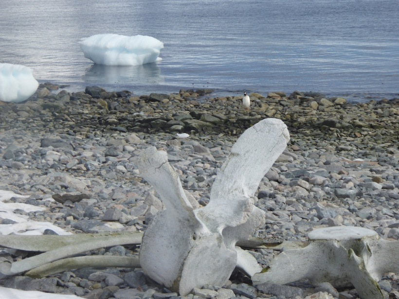 These are whale bones at Damoy Point.