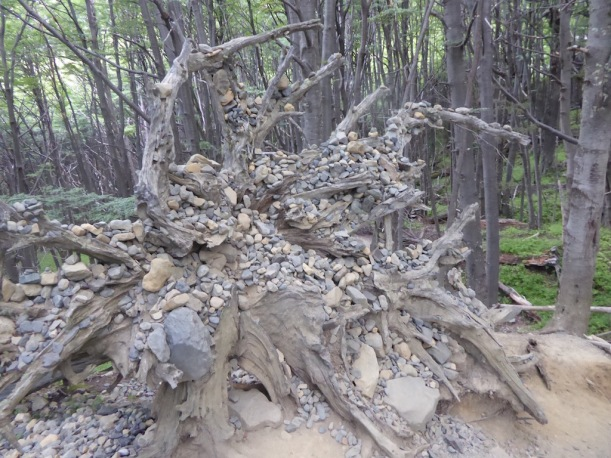 Somebody put rocks in the tree roots.