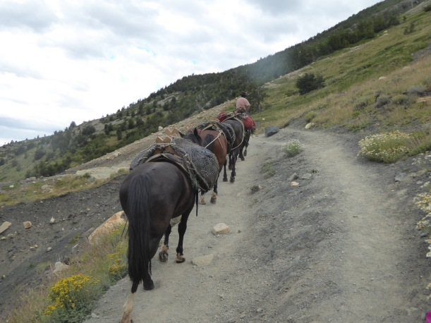 The pack horses passed us.