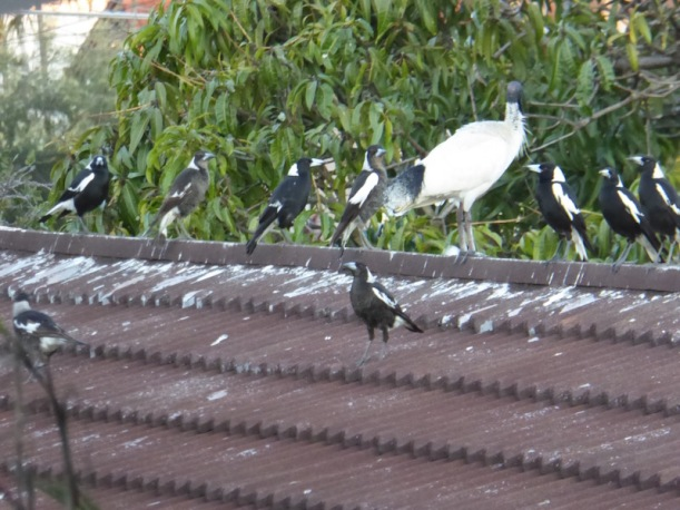 These are birds on a roof.