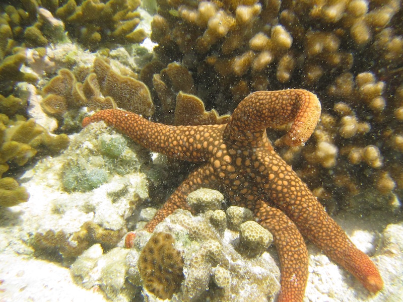 This is a starfish.