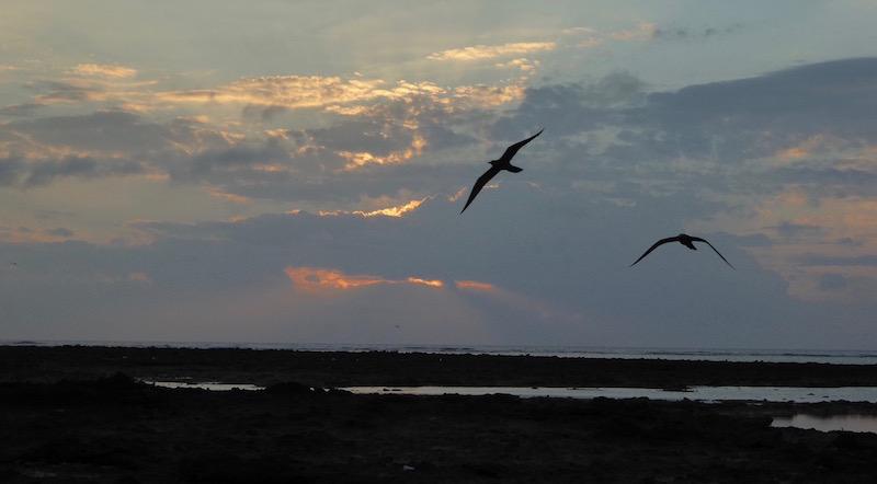 Sunrise on Lady Elliot Island