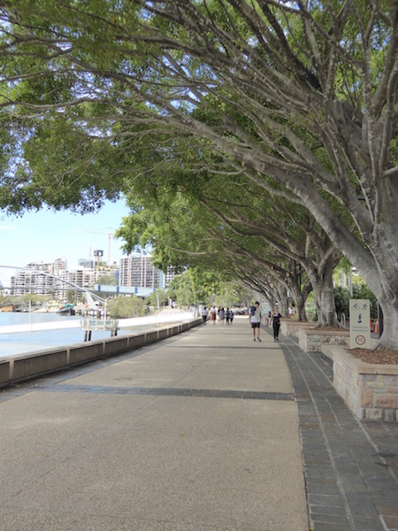 These trees are along the river path in Brisbane