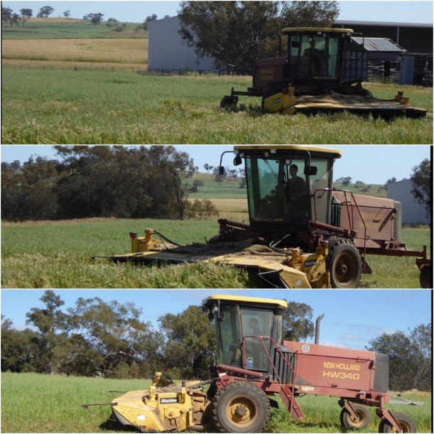 cutting-hay-collage