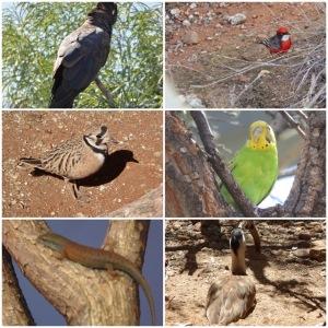 These are birds an.d lizards from Desert Park