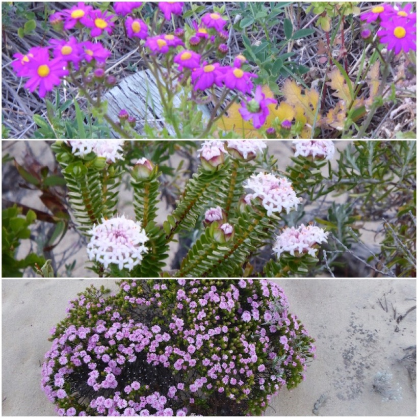 flowers-on-path-and-cliff-collage