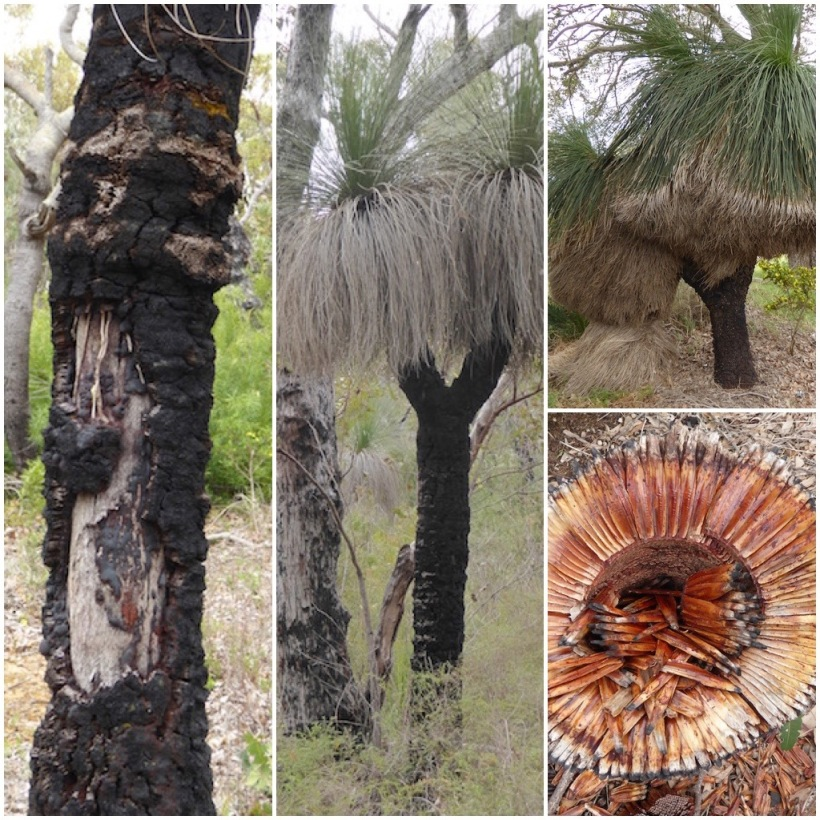 grass-tree-collage-2