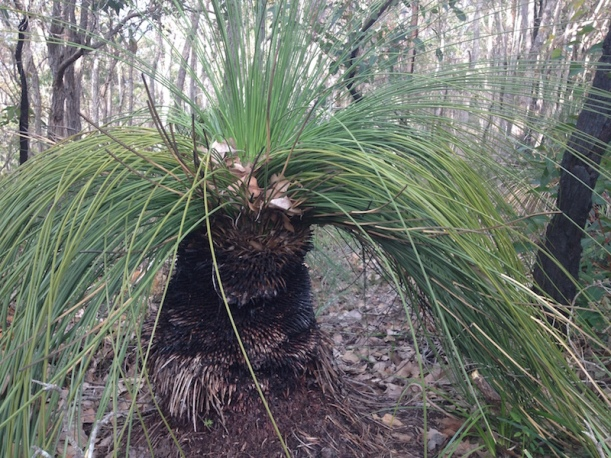 grass-tree-fro-jan