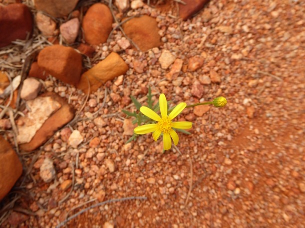 A flower in the labyrinth.