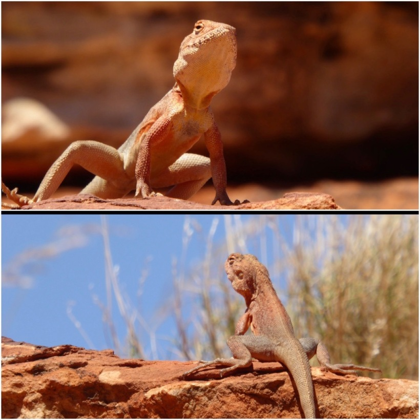 lizard-colage