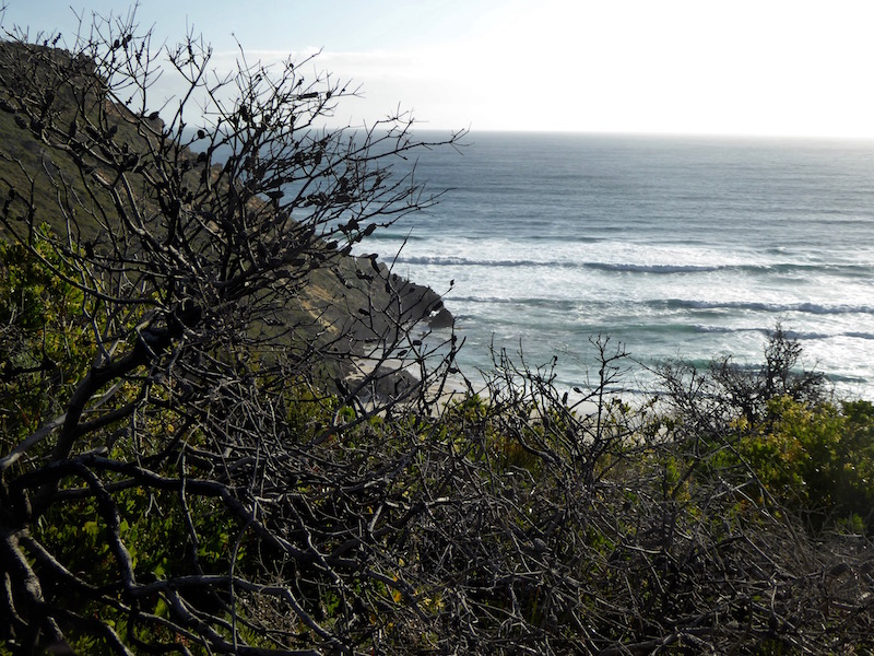 ocean-view-2