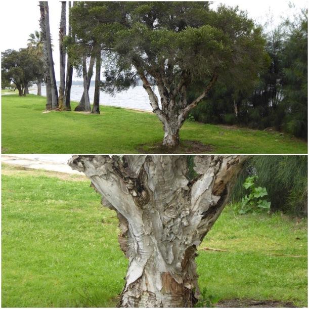 paper-bark-tree-collage
