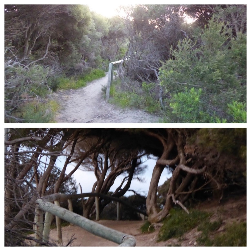 path-in-gracetown-collage
