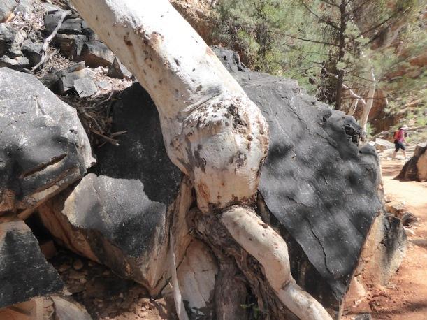 stanley-chasm-black-rocks