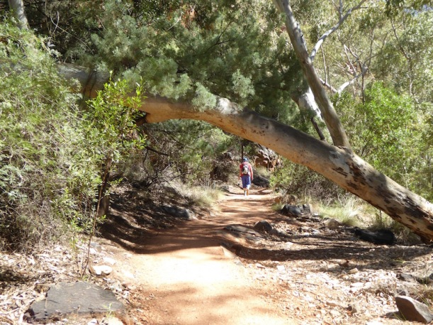stanley-chssm-tree-over-path