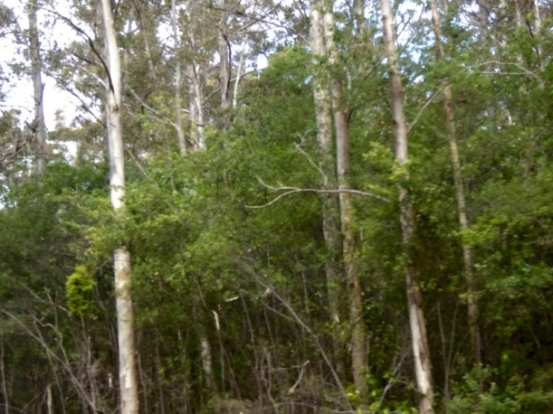 tee-trees