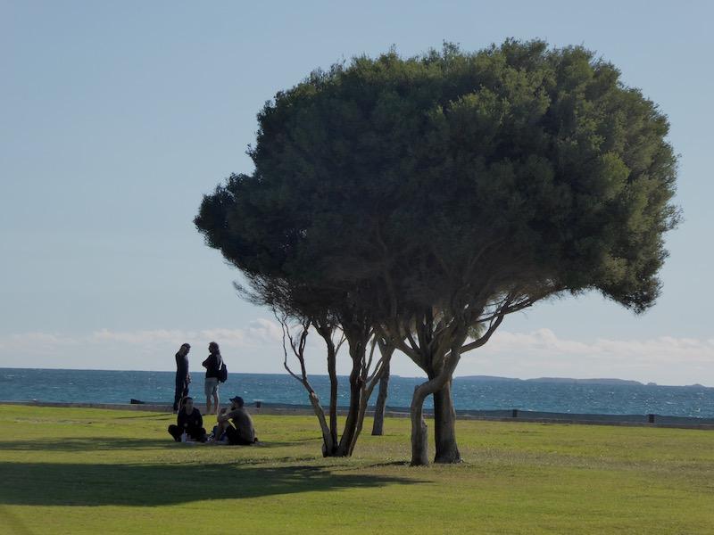 trees-at-beach