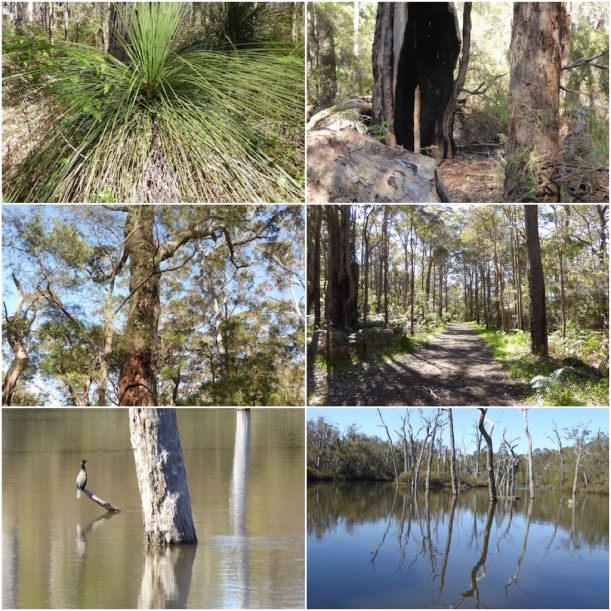 trees-snags-cormorant-on-margaret-river-collage