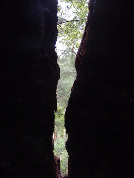 trees-through-hollowed-out