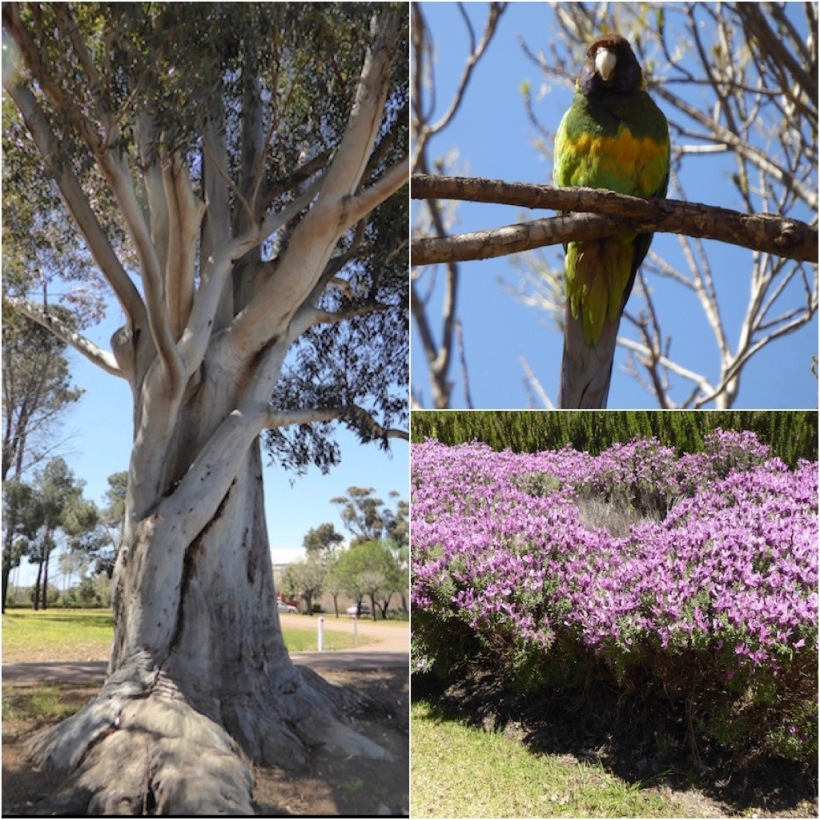 whte-gum-parrot-and-lavender-collage