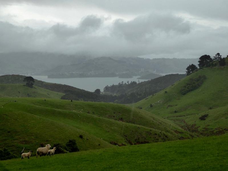 1-sheep-land-and-water