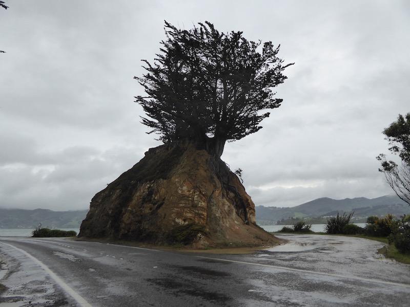 13-tree-on-rock