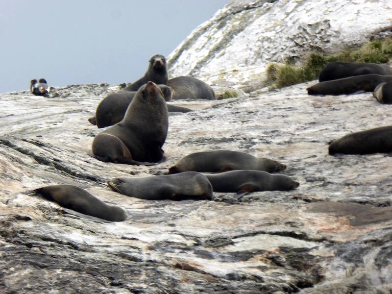 19-new-zealand-seals