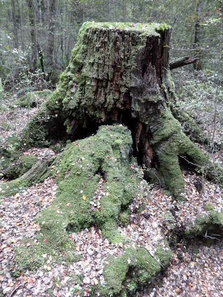 22-moss-on-trunk