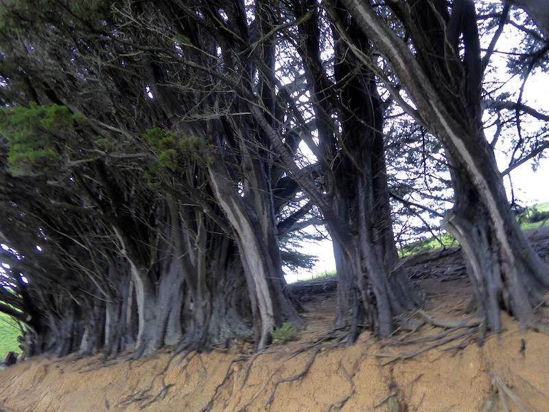 3-tree-trunks