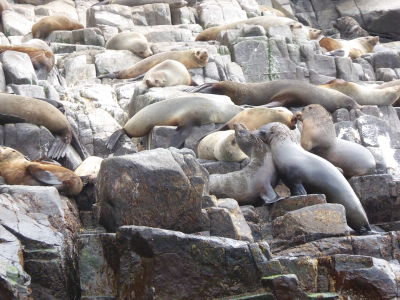 30-seals-playing