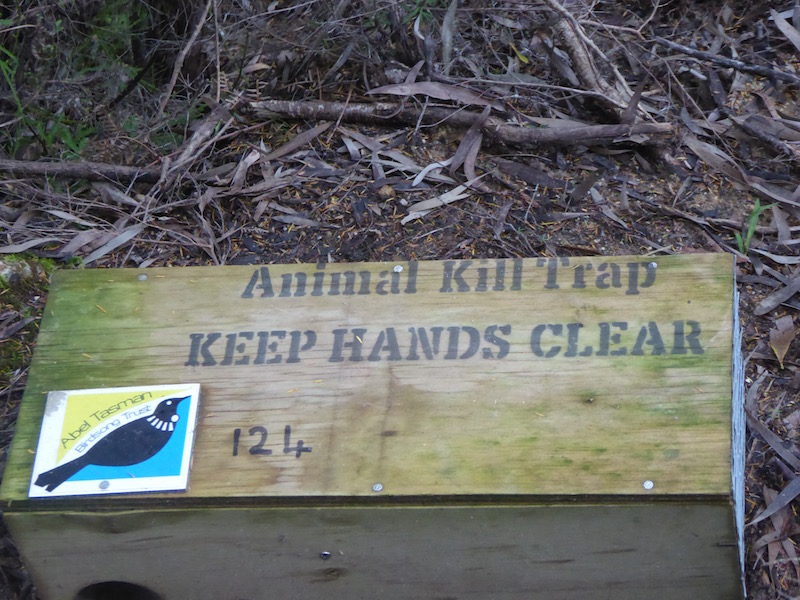 5-birdsong-trust-trap