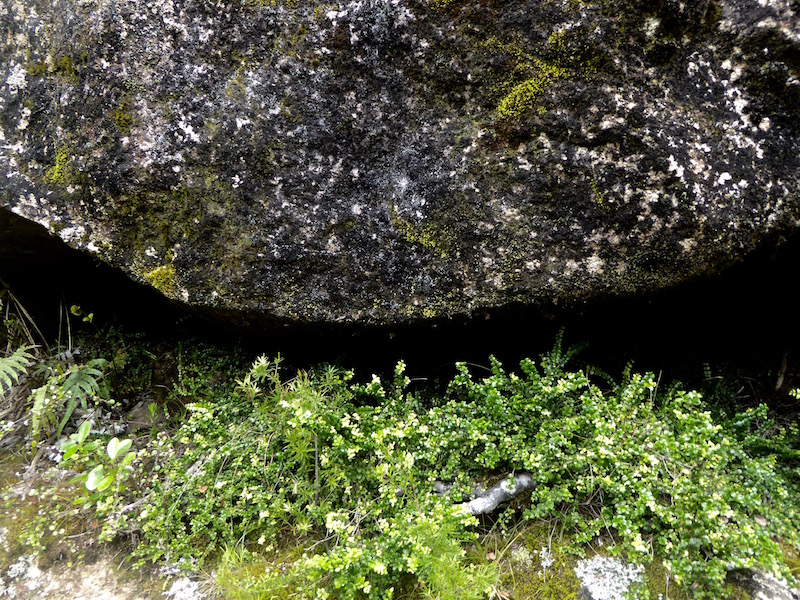 6-plants-under-gap-in-rock