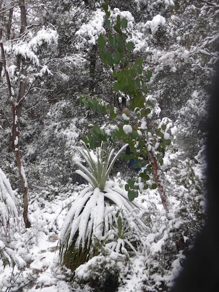 64-pandanis-in-snow