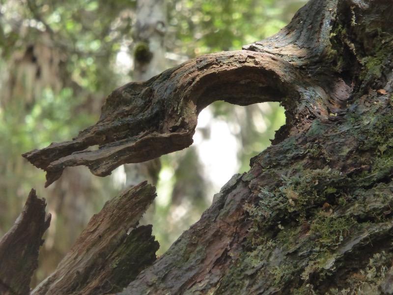 cool-branch