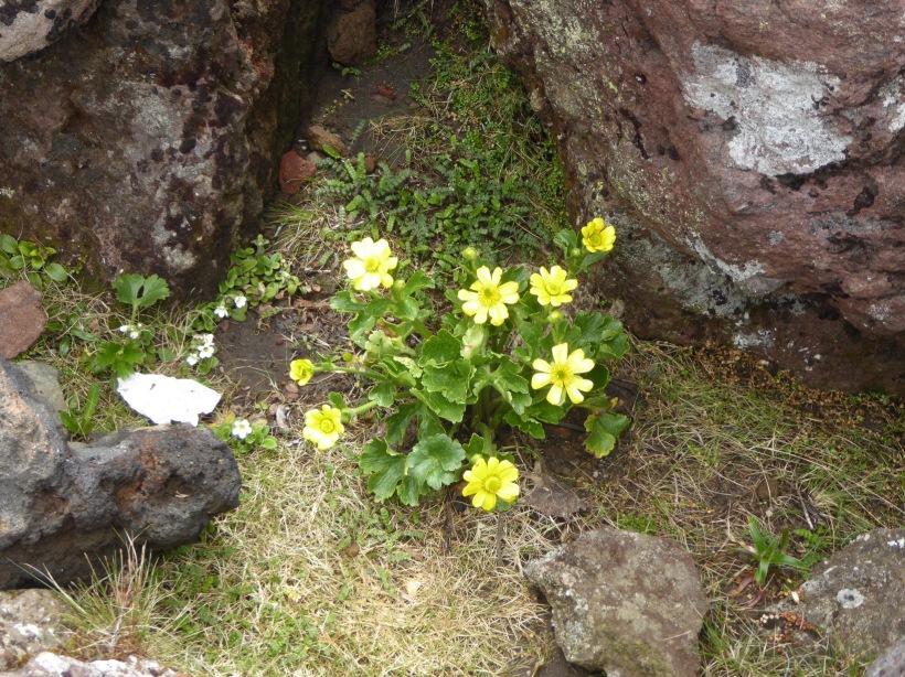 44-flowers-again